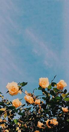 flower aesthetic wallpaper iphone pin skcirnedyac in 2019 wallpaper aesthetic