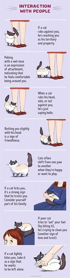 Cat Behavior Chart Cat Behavior Guide Your Cats Moves Explained The Whoot