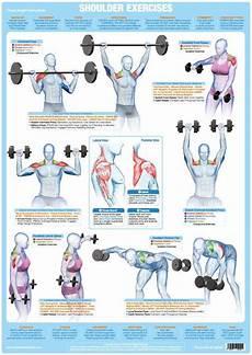 Weight Training Exercises Chart Shoulder Muscles Weight Training Exercise Chart Chartex Ltd