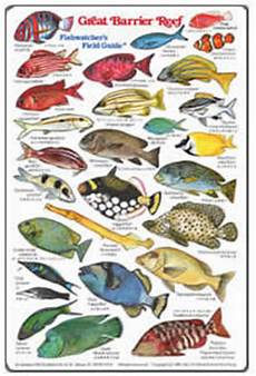 Reef Fish Identification Chart Fish Identification Guides Reef Fish Identification