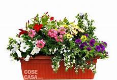 fioriere da davanzale sul davanzale una cassetta fiorita tutta l estate fiori