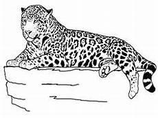 Kinder Malvorlagen Jaguar Ausmalbild Leopard Ausmalbilder F 252 R Kinder Regenwald