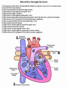 Chart Of Blood Flow Through Heart Blood Flow Through The Heart Diagram And Written Steps