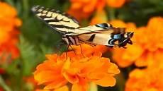Mariposas Y Flores Primavera Mariposas Y Abejas Aprovechando De Las Flores