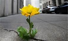 fiori tra l asfalto anima tv per cambiare il mondo comincia dalle tue parole