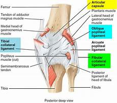 Knees Ligaments And Tendons Torn Meniscus Signs Amp Symptoms Test Diagnosis