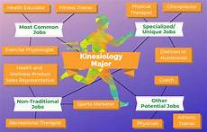 Exercise Science Job Salary 12 Jobs For Kinesiology Majors The University Network