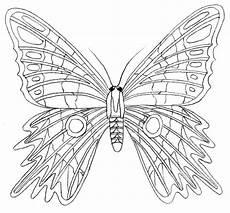 Malvorlage Schmetterling Erwachsene Malvorlage Leicht Schmetterling