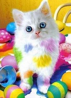 gallery of easter cats easter cats cat colors animals
