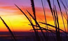 strand solnedgang strand solnedg 229 ng 650wm fototapetonline se