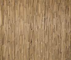 Bamboo Texture Bamboo Texture Top Quality Canvas Print Photowall