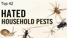 Common Household Pests Top 42 Hated Household Pests Youtube
