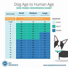 Puppy Age Chart Dog Years To Human Years