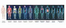 11 Body Systems 11 Body Systems