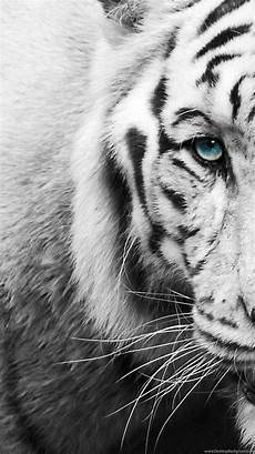 black and white tiger iphone wallpaper tiger iphone wallpapers top free tiger iphone