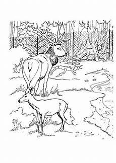 Ausmalbilder Tiere Hirsch Ausmalbilder Hirsche Im Zoo Hirsche Malvorlagen