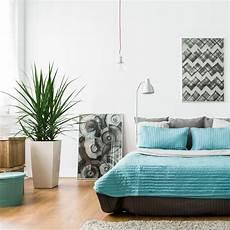 piante per da letto 5 piante per la da letto piante appartamento