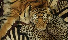 Wildlife Major Illegal Wildlife Trade Threats Wwf