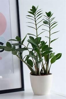 Low Light Apartment Plants Best Plants For Dark Apartments Indoor Plants Low Light