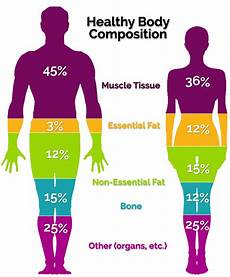 Body Composition The Diabetes Prevention Institute
