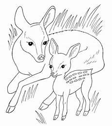 Ausmalbilder Tiere Rehe Malvorlage Reh