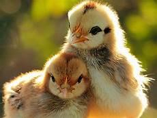 animali cortile prodotti e servizi emporio della natura