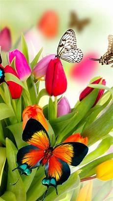 iphone lock screen butterfly wallpaper butterfly wallpaper for iphone on wallpaperget