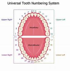 Dental Tooth Number Chart Tooth Numbering Systems In Dentistry News Dentagama