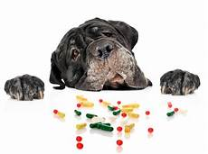 Animal Medicine Medications Tested On Animals Foundation For Biomedical