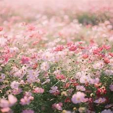 aesthetic flower desktop wallpaper aesthetic flowers wallpapers wallpaper cave
