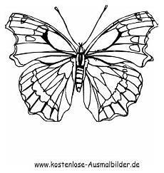 Malvorlagen Zum Ausdrucken Schmetterling Ausmalbilder Schmetterling 10 Tiere Zum Ausmalen