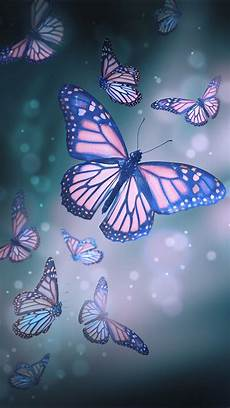 Butterfly Wallpaper For Iphone 6 Plus by The 25 Best Butterfly Wallpaper Ideas On Wall