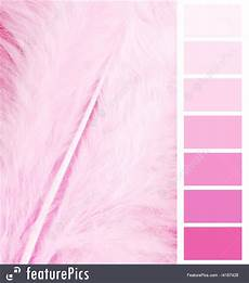 Pink Color Chart Feather Plumage Pink Color Chart Stock Picture I4167428 At