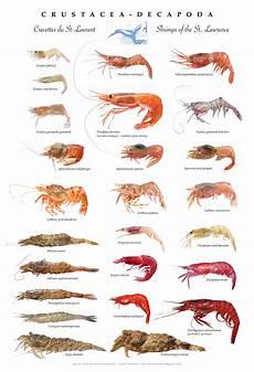 Shellfish Chart Canadian Register Of Marine Species Photogallery