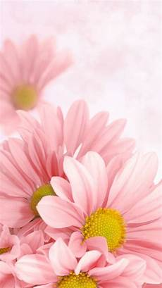 Flower Cell Phone Wallpaper by Phone Wallpapers Flowers Gallery