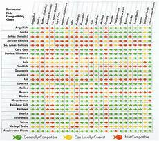 Red Shark Compatibility Chart Freshwater Fish Compatibility Chart Aquascaping