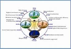 Circadian Rhythm Chart How To Sleep Your Way To Good Health