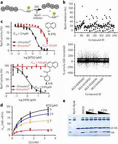 C Design Patterns And Derivatives Pricing Identification Of A Compound That Inhibits Proteasome