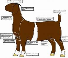 Boer Goat Chart Diagram For Clipping Does Boer Goats