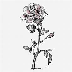 sketch clipart painted roses png