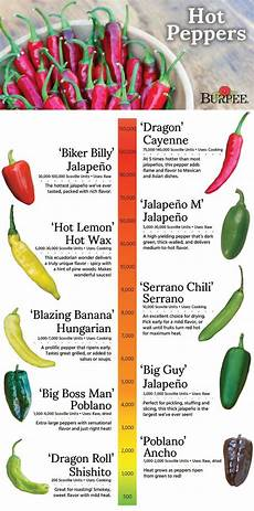 Pepper Chart Pepper Guide Pepper Varieties With Average