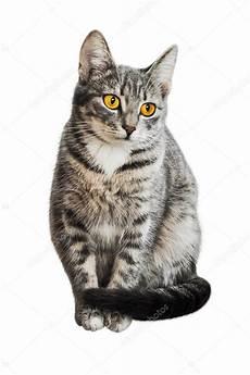 Malvorlage Sitzende Katze Sitzende Katze Isoliert Stockfoto 169 Lilkin 123413580