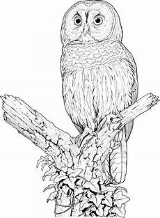 Owl Sheets Owl Coloring Pages