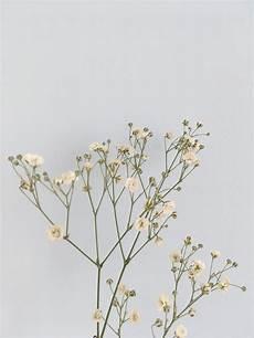 Minimalist Aesthetic Flower Wallpaper by Flowers Aesthetic Minimalism Pastel Blue White