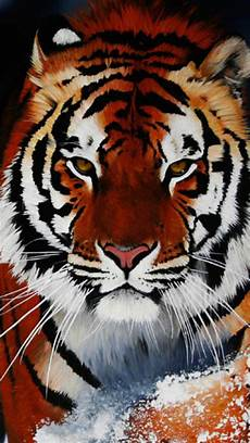 tiger wallpaper iphone 7 tiger wallpaper for iphone 7 plus