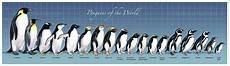 Types Of Penguins Chart The Amazing Penguin Rescue Narrative Nonfiction