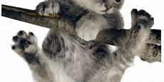 kitten proofing your home petvetoasis