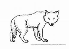 Bilder Zum Ausmalen Wolf Wolf In Der Grundschule Tiere Zum Ausmalen