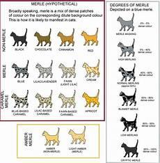 Cat Behavior Chart Picture Cats Pinterest Genetics Cat And Cat Colors