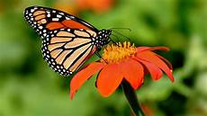 Mariposas Y Flores Monarch Butterfly Sanctuary In Mexico Officially Opens For
